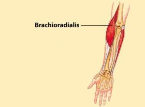 Брахирадиалис